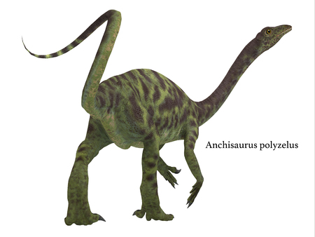 Anchisaurus was a omnivorous prosauropod dinosaur that lived in the Jurassic Periods of North America, Europe and Africa. Archivio Fotografico