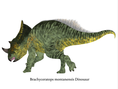 Brachyceratops Dinosaur Tail with Font - Brachyceratops is a herbivorous Ceratopsian dinosaur that lived in Alberta, Canada and Montana, USA in the Cretaceous Period. Stock Photo
