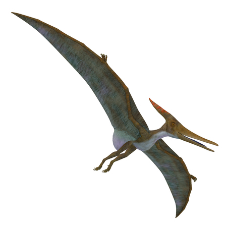 Pteranodon Reptile Soaring - Pteranodon was a flying carnivorous reptile that lived in North America in the Cretaceous Period.
