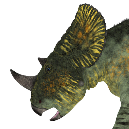 Brachyceratops Dinosaur Head - Brachyceratops is a herbivorous Ceratopsian dinosaur that lived in Alberta, Canada and Montana, USA in the Cretaceous Period. Stock Photo