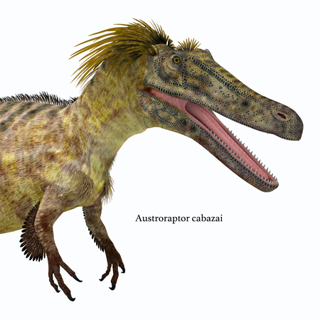 Austroraptor Dinosaur head with font - Austroraptor was a carnivorous theropod dinosaur that lived in Argentina in the Cretaceous Period.