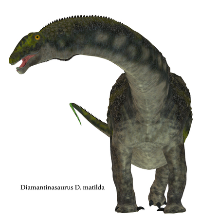 Diamantinasaurus was a herbivorous sauropod dinosaur that lived in Australia during the Cretaceous Period.