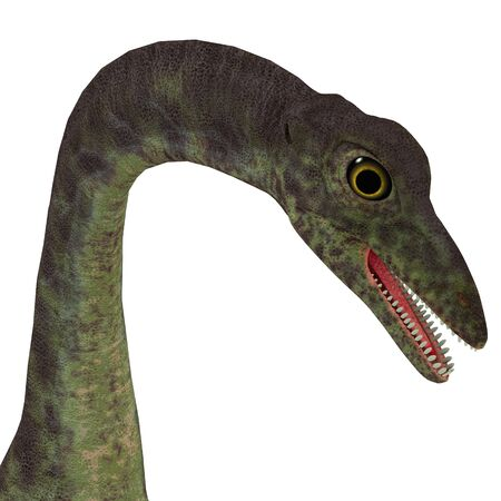 Anchisaurus Dinosaur Head - Anchisaurus was a omnivorous prosauropod dinosaur that lived in the Jurassic Periods of North America, Europe and Africa.