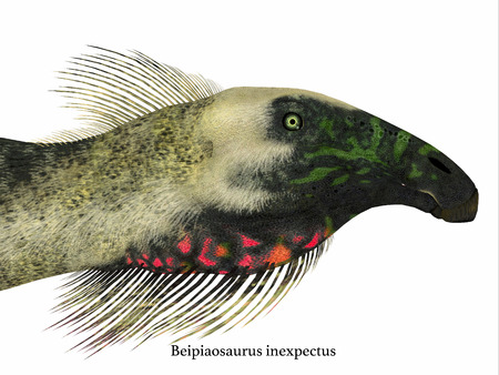 Beipiaosaurus Dinosaur Head with Font - Beipiaosaurus was a herbivorous theropod dinosaur that lived in China in the Cretaceous Period.