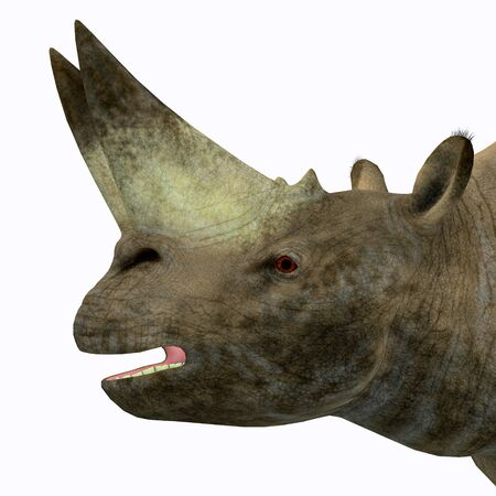 Arsinoitherium Mammal Head - Arsinoitherium was a herbivorous rhinoceros-like mammal that lived in Africa in the Early Oligocene Period. Stock Photo