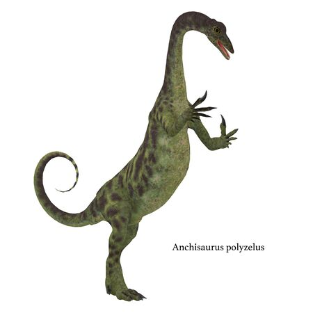 Anchisaurus was a omnivorous prosauropod dinosaur that lived in the Jurassic Periods of North America, Europe and Africa. Stock Photo