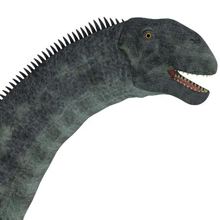 Cetiosaurus Dinosaur Head - Cetiosaurus was a herbivorous sauropod dinosaur that lived in Morocco, Africa in the Jurassic Period.