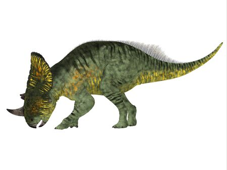 Brachyceratops is a herbivorous Ceratopsian dinosaur that lived in Alberta, Canada and Montana, USA in the Cretaceous Period. Stock Photo