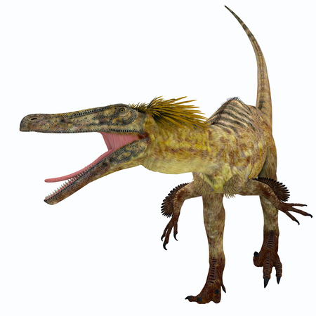 Austroraptor was a carnivorous theropod dinosaur that lived in Argentina in the Cretaceous Period. Stock Photo
