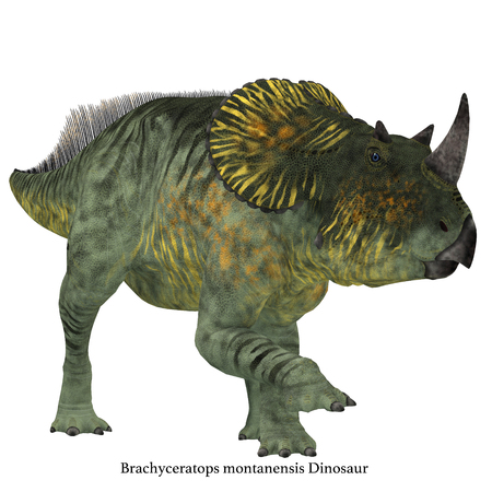 Brachyceratops Dinosaur on White with Font - Brachyceratops is a herbivorous Ceratopsian dinosaur that lived in Alberta, Canada and Montana, USA in the Cretaceous Period.