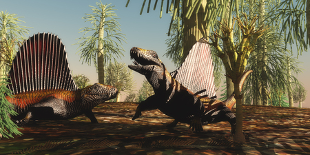 Dimetrodon Permian Reptiles - Dimetrodon reptiles have a territorial dispute over which animal is stronger and braver in the Permian Age. Stock Photo