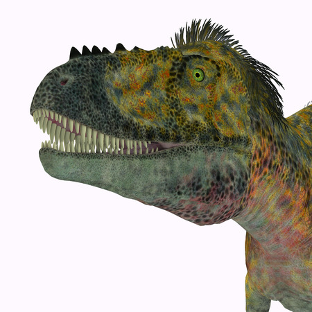 Alioramus Dinosaur Head - Alioramus was a carnivorous theropod dinosaur that lived in Asia in the Cretaceous Period.