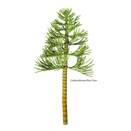 フォント - 石炭紀おそらくコルダイテス (裸子植物)、コーンのような肥沃な構造と沈み込んでいた植物の種属に起因する最古の針葉樹と石炭紀の松