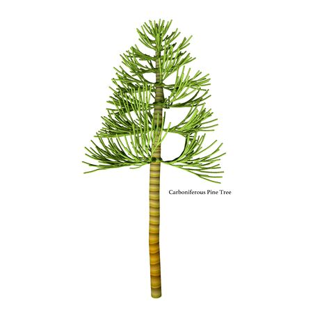 Carboniferous Pine Tree with Font - The earliest conifers date to the Carboniferous Period possibly arising from the Cordaites, a genus of seed-bearing Gondwanan plants with cone-like fertile structures.