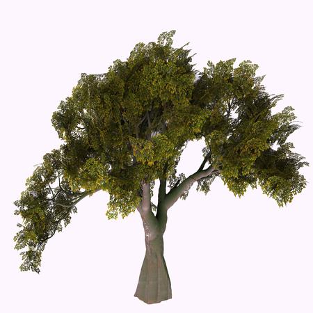 영어 오크 나무 - 오크 나무는 낙엽 또는 상록수 품종으로 600 종으로 나뉘며 도토리 과일 너트를 개발합니다. 스톡 콘텐츠 - 88606623