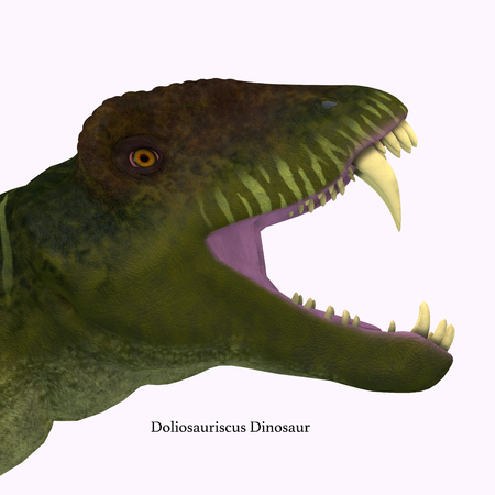 Doliosauriscus Dinosaur Head with Font - Doliosauriscus is an extinct genus of therapsid carnivorous dinosaur that lived in Russia in the Permian Period.