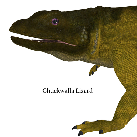Chuckwalla Lizard Head with Font - The Chuckwalla is a large lizard found primarily in arid regions of the southern United States and northern Mexico.
