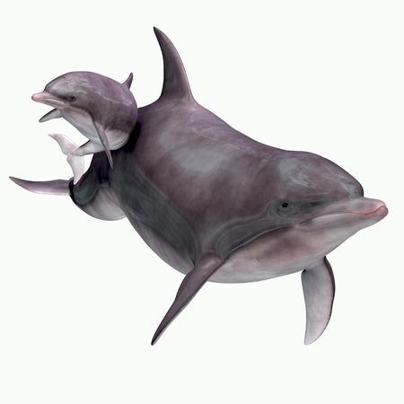 Bottlenose Dolphin Mother and Baby - De tuimelaar leeft in warme en gematigde zeeën en zoekt naar voedervissen om te eten.