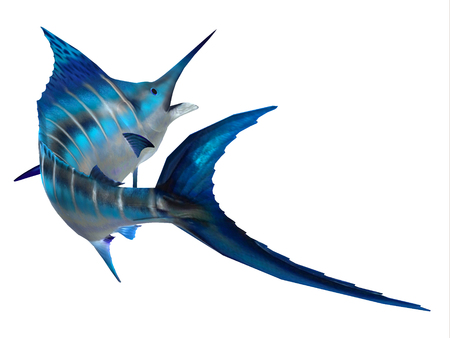 Marlin Fish Tail - The Atlantic Blue Marlin fish is the largest bony fish and is a popular game fish in the Atlantic ocean. Stock Photo