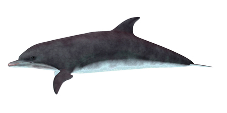 Bottlenose Dolphin Side Profile - De tuimelaar leeft in warme en gematigde zeeën en zoekt naar voedervissen om te eten. Stockfoto
