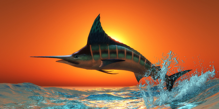 Atlantic Blue Marlin - An Atlantic Blue Marlin jumps out of the blue ocean in a spectacular leap at sunset. Stock Photo