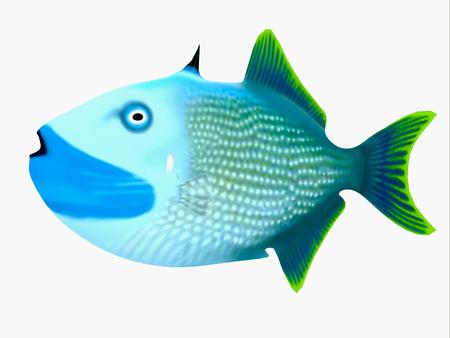 Blue Jaw Triggerfish - The Blue Jaw Triggerfish is a saltwater species reef fish in tropical regions of major oceans. Stok Fotoğraf - 90239604