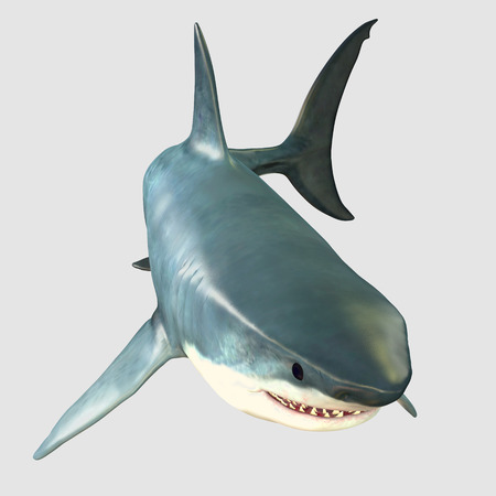 Overview Great White Shark - The Great White Shark is one of the largest predators in the ocean and inhabits temperate and warm coastal seas.