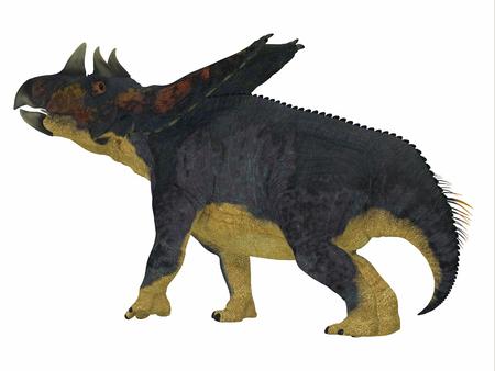 Chasmosaurus Dinosaur Tail - Chasmosaurus was a herbivorous ceratopsian dinosaur that lived in Alberta, Canada during the Cretaceous period.