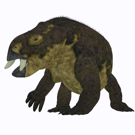 Placerias Dinosaur on White - Placerias was a herbivorous dicynodont dinosaur that lived in Arizona, USA in the Triassic Period.