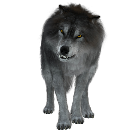 Dire Wolf on White - The Dire Wolf was a prehistoric carnivore that lived in North and South America during the Pleistocene Period. Stock Photo