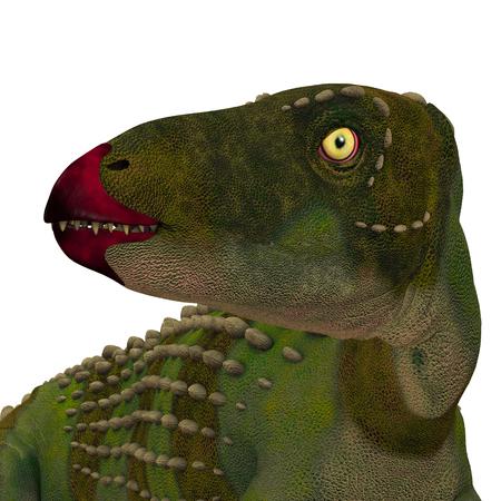 Scutellosaurus Dinosaur Head - Scutellosaurus was an armored herbivore dinosaur that lived in Arizona, USA during the Jurassic Period. Stock Photo