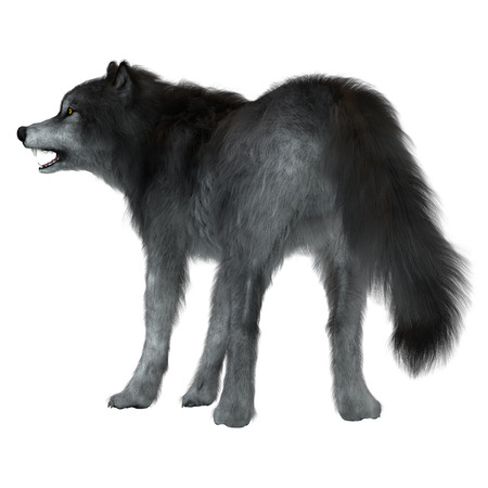 Dire Wolf Tail - The Dire Wolf was a prehistoric carnivore that lived in North and South America during the Pleistocene Period. Фото со стока
