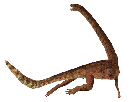 Tanystropheus Dinosaur Tail - Tanystropheus was a marine predatory reptile that lived in the Triassic Seas of Europe and the Middle East.