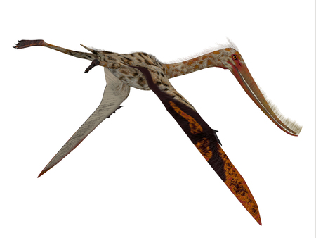 Pterodaustro Reptile Tail - Pterodaustro guinazui was a carnivorous flying reptile that lived in South America during the Cretaceous Period. Reklamní fotografie