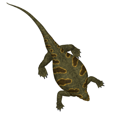 Cotylorhynchus Dinosaur on White - Cotylorhynchus was a synapsid herbivorous reptile that lived in North America during the Permian Period. Stok Fotoğraf