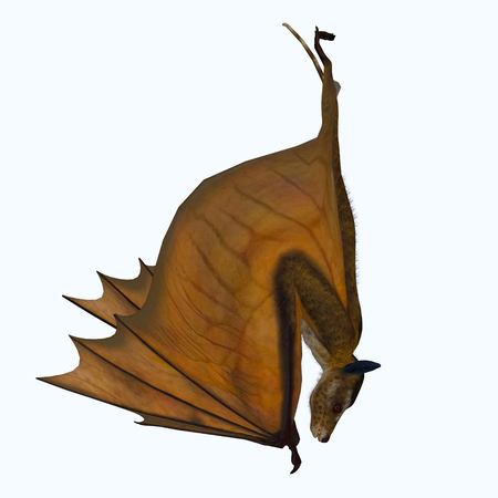 Icaronycteris Bat Hanging - Icaronycteris index is the first bat known to science and lived in North America in the Eocene Period.