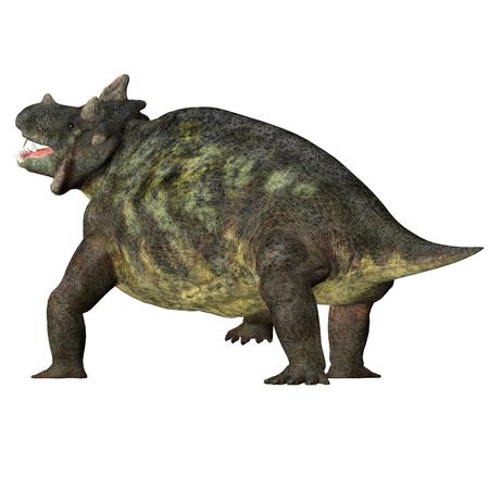 Estemmenosuchus mirabilis Dinosaur Tail - Estemmenosuchus mirabilis was an omnivorous therapsid dinosaur that lived in the Permian Period of Russia. Stock Photo