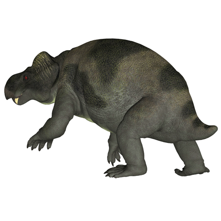 Kannemeyeria Dinosaur Tail - Kannemeyeria was a herbivorous dicynodont dinosaur the lived in South Africa, Argentina, India and China during the Triassic Period.