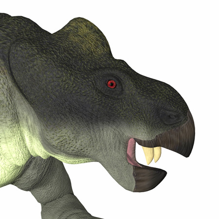 Kannemeyeria Dinosaur Head - Kannemeyeria was a herbivorous dicynodont dinosaur the lived in South Africa, Argentina, India and China during the Triassic Period.