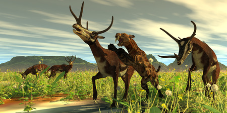 Kyptoceras attacked by Saber-toothed Cat - A Saber-toothed Cat comes out of high vegetation to attack a Kyptoceras deer during the Pleistocene Period.