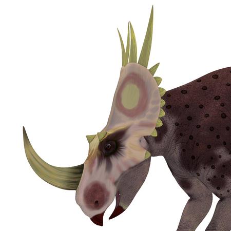 Rubeosaurus Dinosaur Head - Rubeosaurus was a herbivorous Ceratopsian dinosaur that lived in North America during the Cretaceous Period.