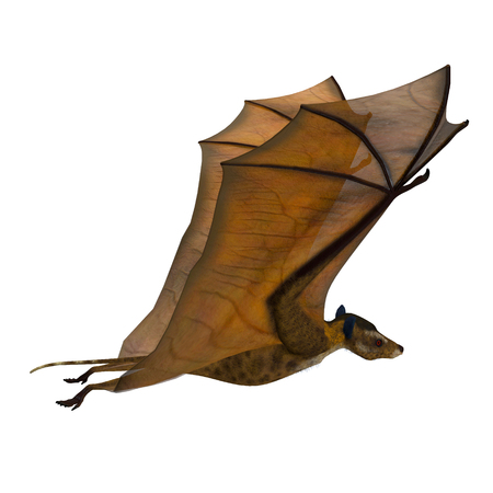 Icaronycteris Bat Wings Up - Icaronycteris index is the first bat known to science and lived in North America in the Eocene Period. Stock Photo