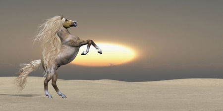 The sun sets on a golden Palomino wild stallion showing his power and vitality in a desert landscape.