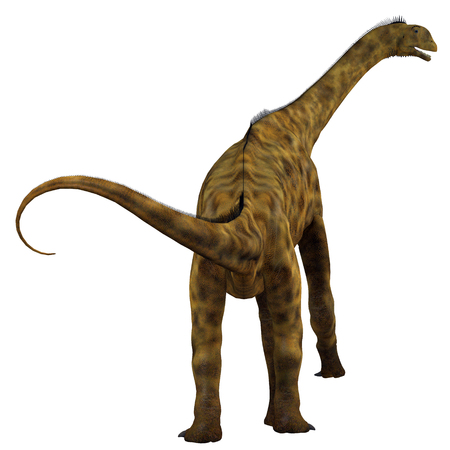 Atlasaurus Dinosaur Tail - Atlasaurus was a herbivorous sauropod dinosaur that lived in Morocco, North Africa during the Jurassic Period.