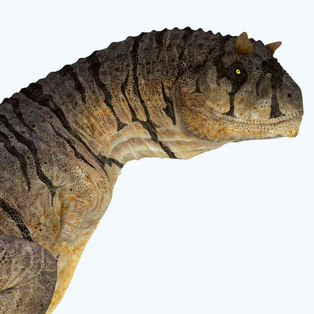 Carnotaurus sastrei Dinosaur Head - Carnotaurus was a carnivorous theropod dinosaur that lived in Patagonia, Argentina during the Cretaceous Period.