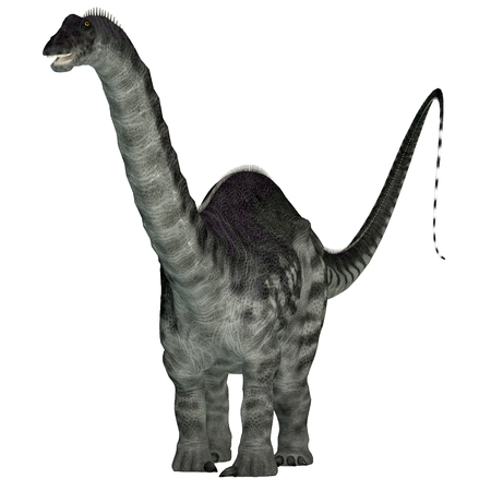 Apatosaurus Dinosaur on White - Apatosaurus was a herbivorous sauropod dinosaur that lived in North America during the Jurassic Period.