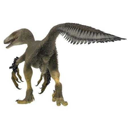 Dakotaraptor Dinosaur Tail - Dakotaraptor was a carnivorous dromaeosaurid theropod dinosaur that lived in South Dakota, North America during the Cretaceous Period. Stock Photo - 106796229