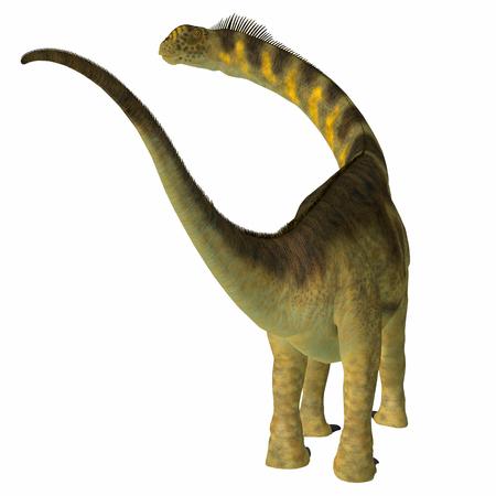 Camarasaurus Dinosaur Tail - Camarasaurus was a herbivorous sauropod dinosaur that lived in North America during the Jurassic Period.