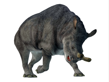 Brontotherium Mammal on White - Brontotherium was a horned herbivorous mammal that lived in North America during the Early Oligocene Period.