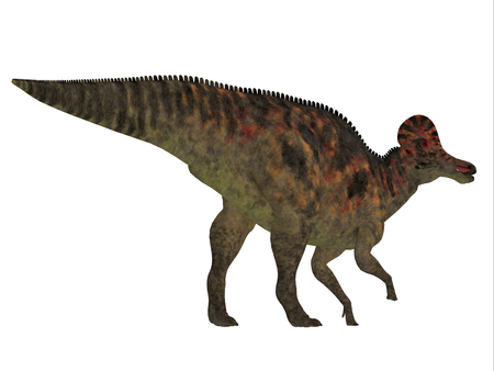 Corythosaurus Dinosaur Tail - Corythosaurus was a duck-billed herbivorous dinosaur that lived in North America during the Cretaceous Period. Stock Photo